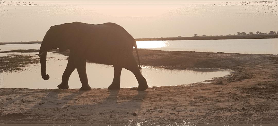 Le parc Chobe