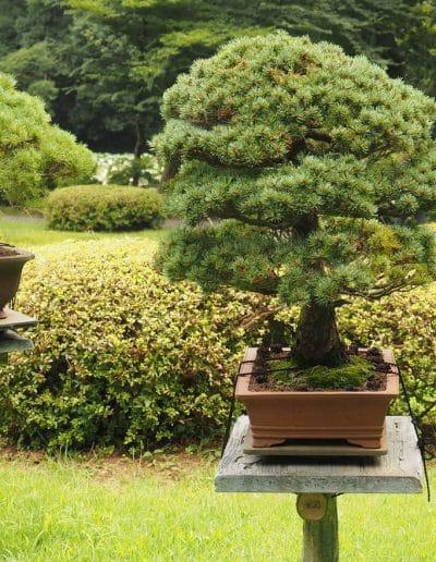 Jardins du Parc Yoyogi